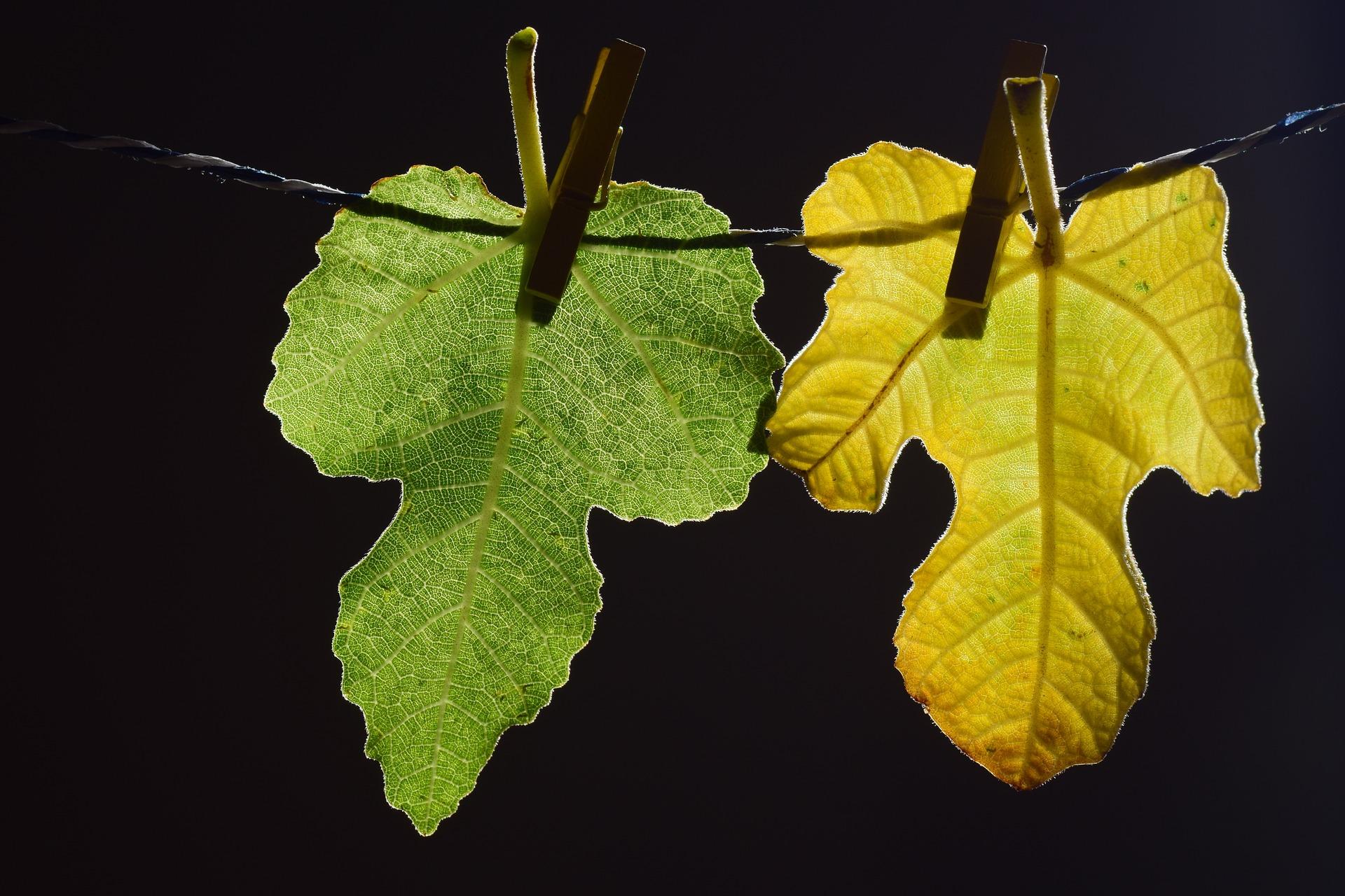 leaves-2671780_1920